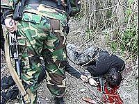 В Чечне произошло столкновение с бандой боевиков. Фото с сайта ura.ru