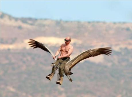Летавший с Путиным стерх нашел себе пару  НТВRu